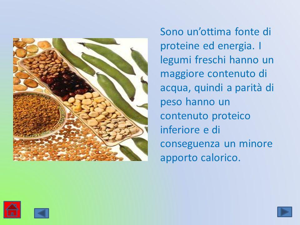 Sono unottima fonte di proteine ed energia. I legumi freschi hanno un maggiore contenuto di acqua, quindi a parità di peso hanno un contenuto proteico
