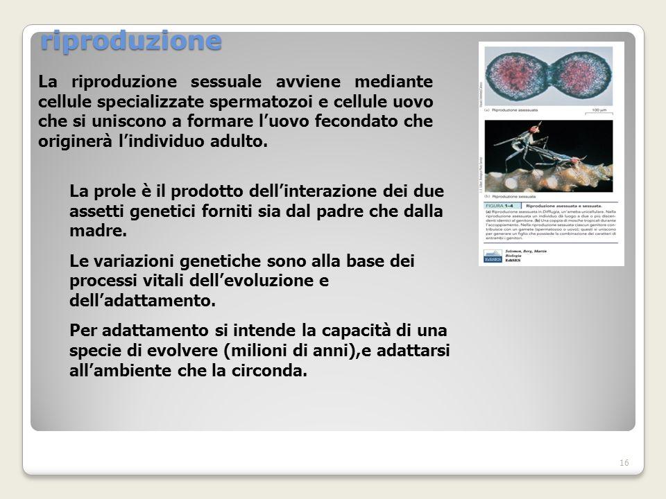 riproduzione La riproduzione sessuale avviene mediante cellule specializzate spermatozoi e cellule uovo che si uniscono a formare luovo fecondato che originerà lindividuo adulto.