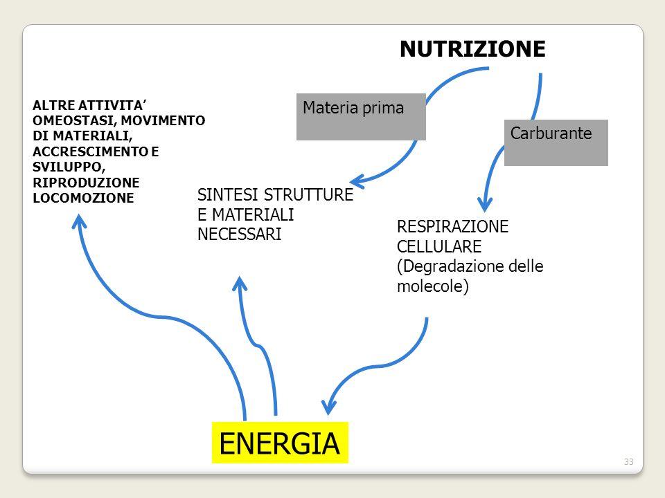 ALTRE ATTIVITA OMEOSTASI, MOVIMENTO DI MATERIALI, ACCRESCIMENTO E SVILUPPO, RIPRODUZIONE LOCOMOZIONE SINTESI STRUTTURE E MATERIALI NECESSARI RESPIRAZIONE CELLULARE (Degradazione delle molecole) ENERGIA NUTRIZIONE 33 Materia prima Carburante