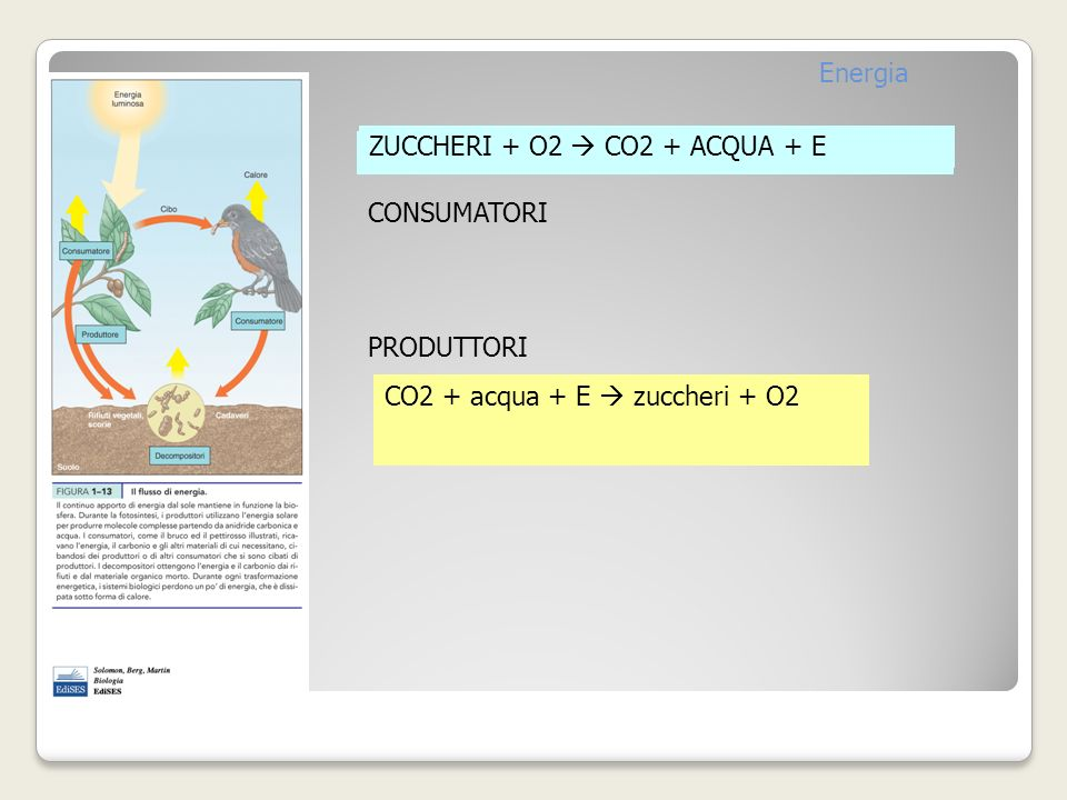 ZUCCHERI + O2 CO2 + ACQUA + E CONSUMATORI PRODUTTORI CO2 + acqua + E zuccheri + O2 Energia ZUCCHERI + O2 CO2 + ACQUA + E