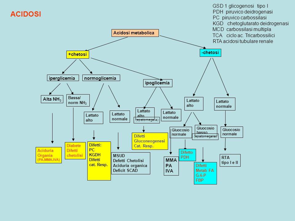 Acidosi metabolica +chetosi -chetosi iperglicemia Alta NH 3 Bassa/ norm NH 3 normoglicemia ipoglicemia Lattato alto Lattato normale Lattato alto Latta