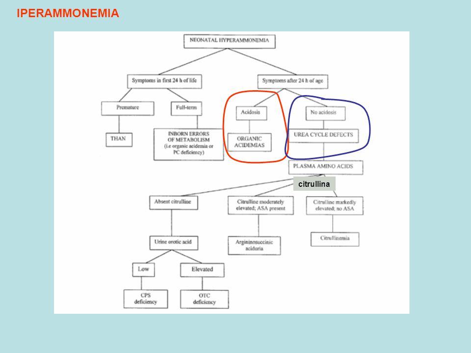IPERAMMONEMIA citrullina