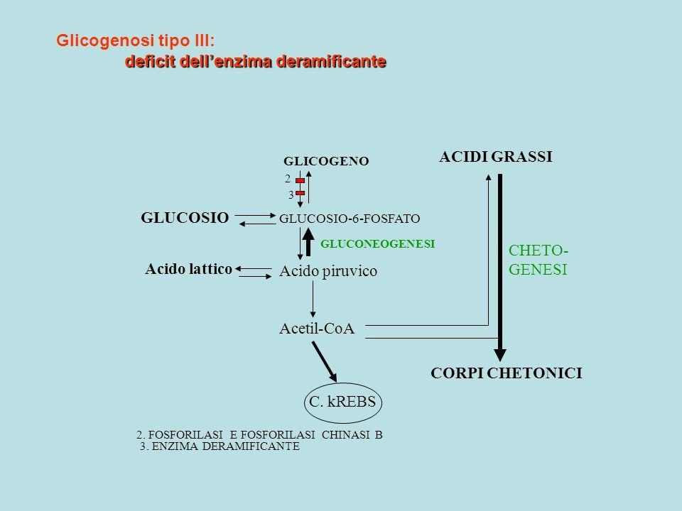 GLICOGENO GLUCOSIO-6-FOSFATO Acido piruvico Acetil-CoA GLUCOSIO Acido lattico 2 3 ACIDI GRASSI CORPI CHETONICI C. kREBS 2. FOSFORILASI E FOSFORILASI C