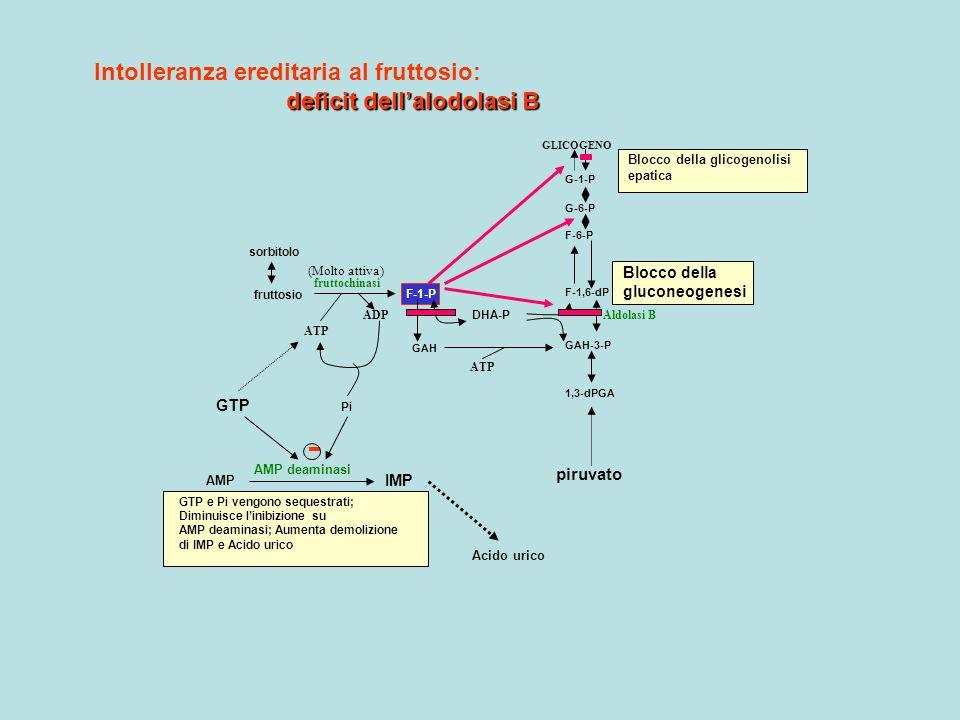 GLICOGENO G-1-P G-6-P F-6-P F-1,6-dP GAH-3-P 1,3-dPGA GAH F-1-P fruttosio sorbitolo DHA-P ATP ADP ATP fruttochinasi Aldolasi B Blocco della glicogenol