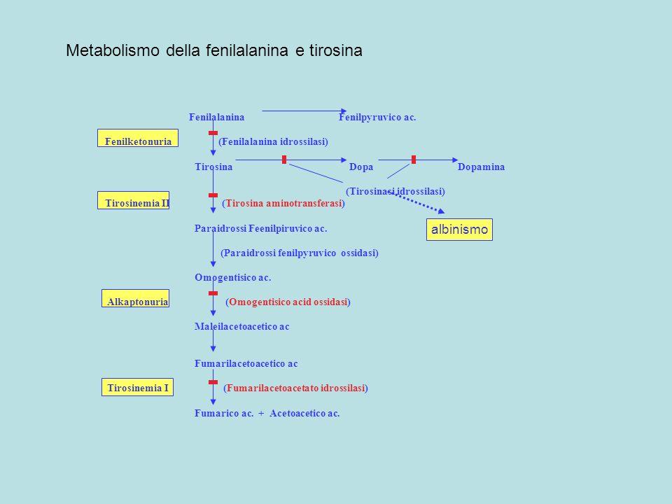 Fenilalanina Fenilpyruvico ac. Fenilketonuria (Fenilalanina idrossilasi) Tirosina Dopa Dopamina (Tirosinasi idrossilasi) Tirosinemia II (Tirosina amin