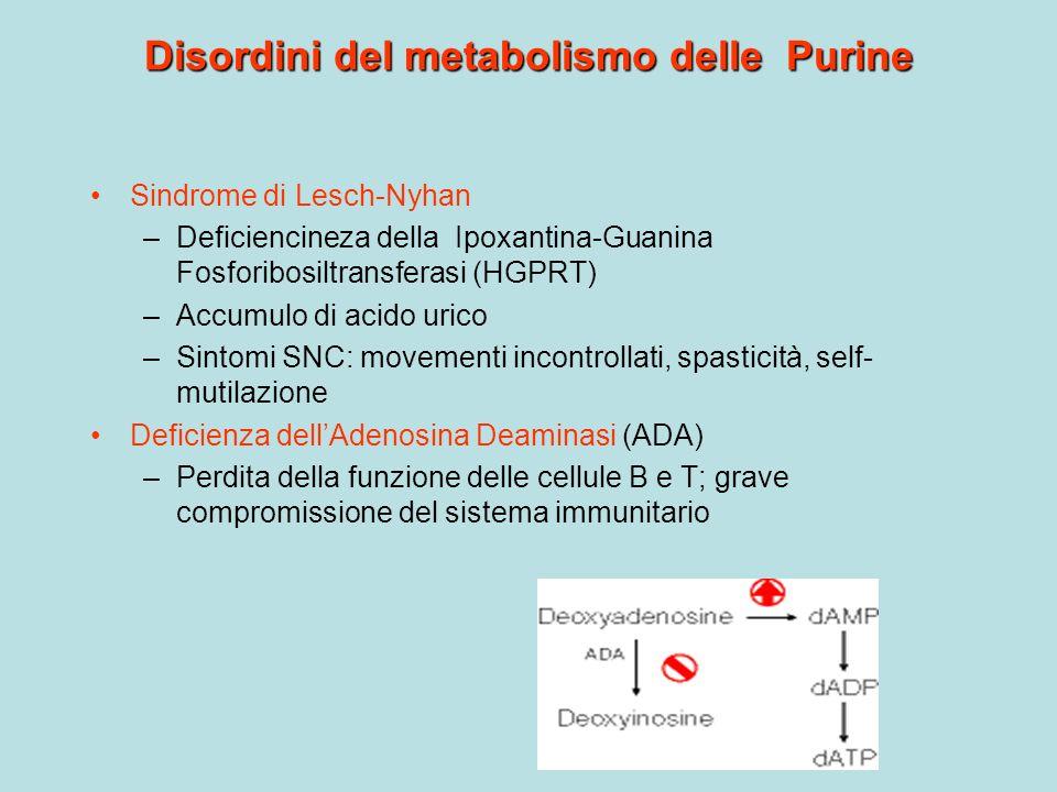 Disordini del metabolismo delle Purine Sindrome di Lesch-Nyhan –Deficiencineza della Ipoxantina-Guanina Fosforibosiltransferasi (HGPRT) –Accumulo di a