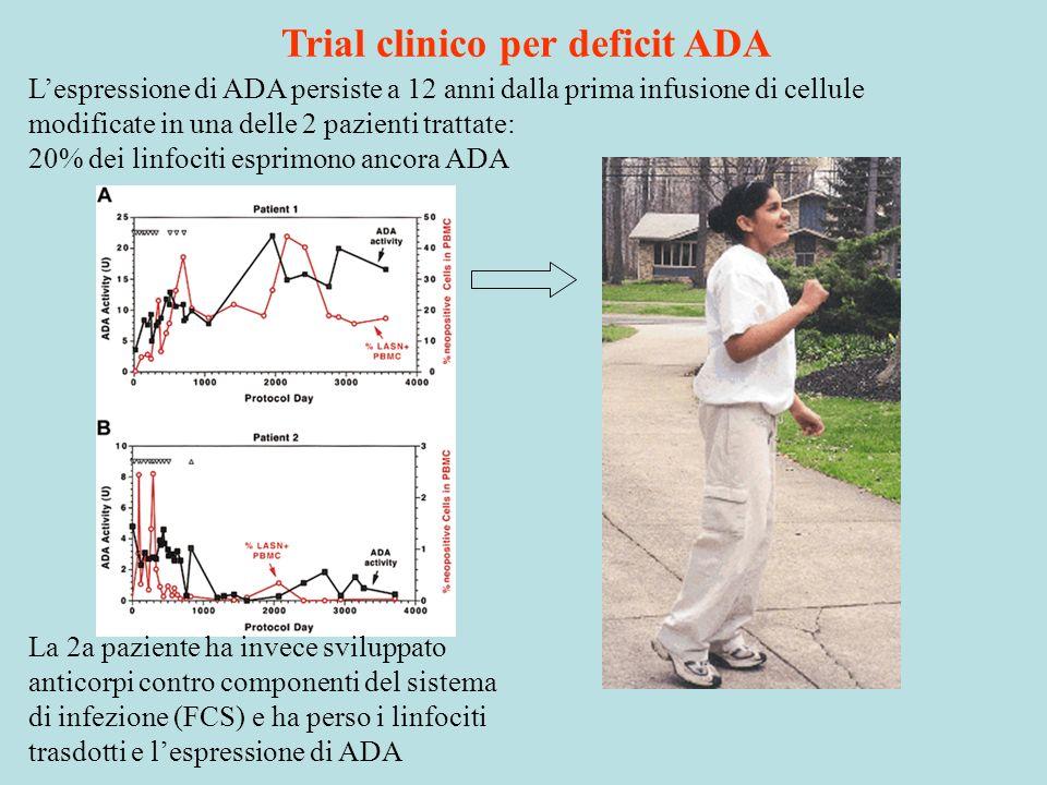 Lespressione di ADA persiste a 12 anni dalla prima infusione di cellule modificate in una delle 2 pazienti trattate: 20% dei linfociti esprimono ancor