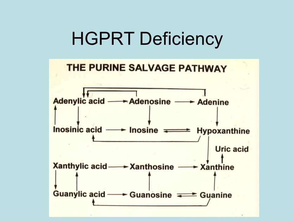 HGPRT Deficiency