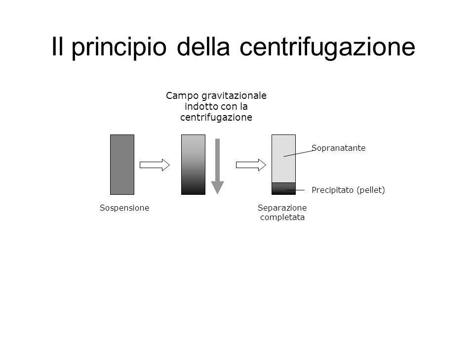 Il principio della centrifugazione Sospensione Campo gravitazionale indotto con la centrifugazione Precipitato (pellet) Sopranatante Separazione compl