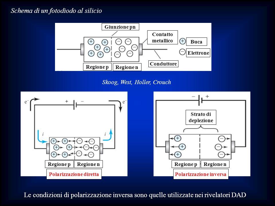 Skoog, West, Holler, Crouch Schema di un fotodiodo al silicio Giunzione pn Contatto metallico Buca Elettrone Conduttore Regione p Regione n Regione pR