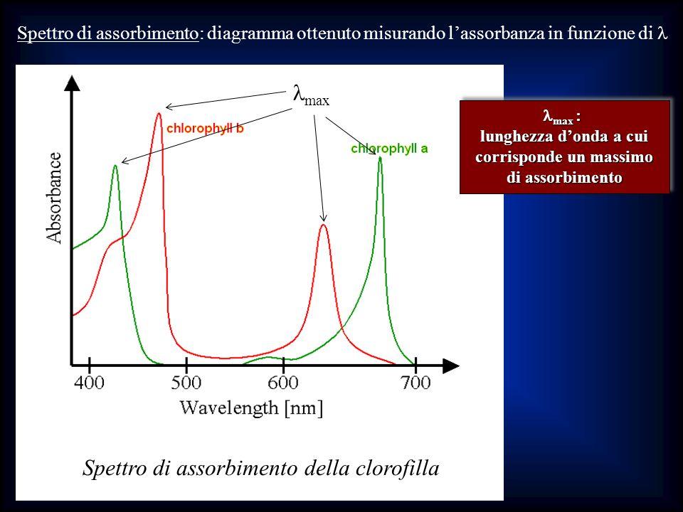 Spettro di assorbimento della clorofilla max Spettro di assorbimento: diagramma ottenuto misurando lassorbanza in funzione di max : max : lunghezza do