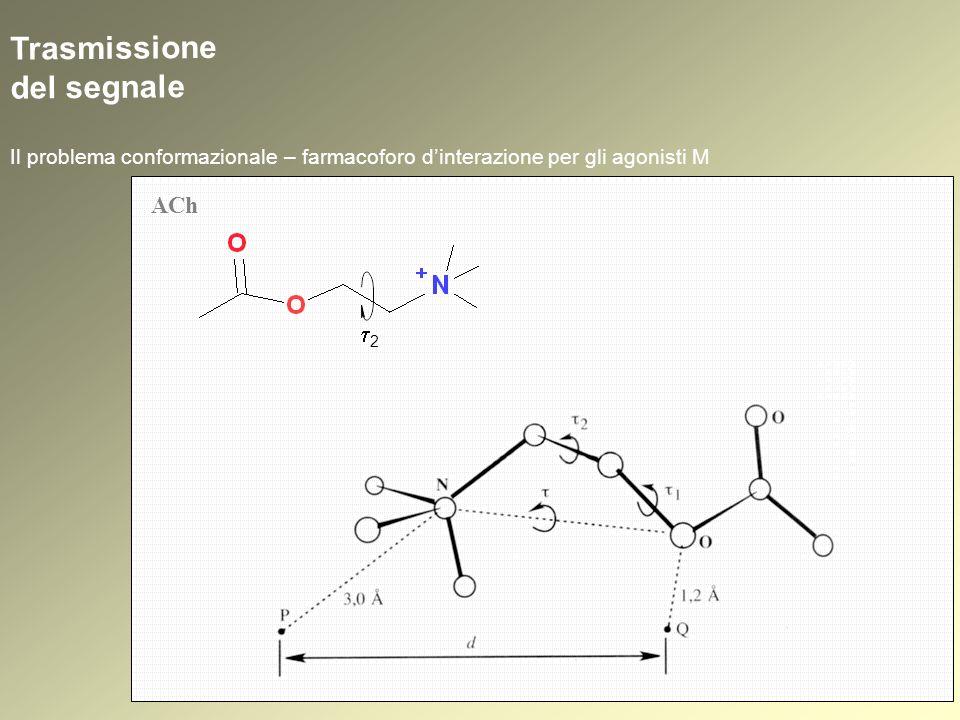 Trasmissione del segnale Il problema conformazionale – farmacoforo dinterazione per gli agonisti M ACh 2