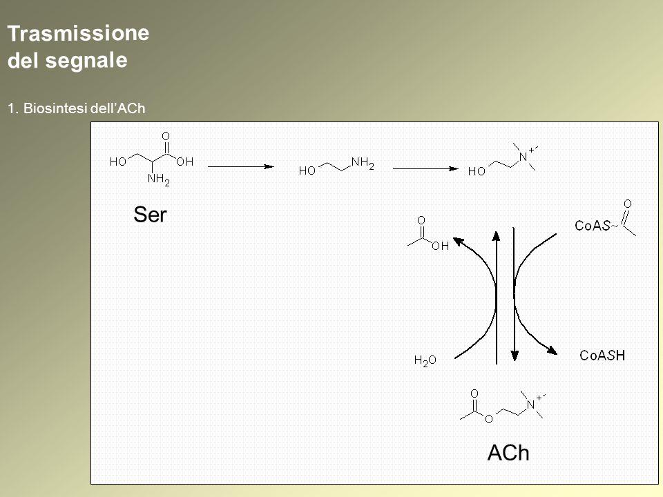 Trasmissione del segnale Controllo presinaptico della trasmissione colinergica
