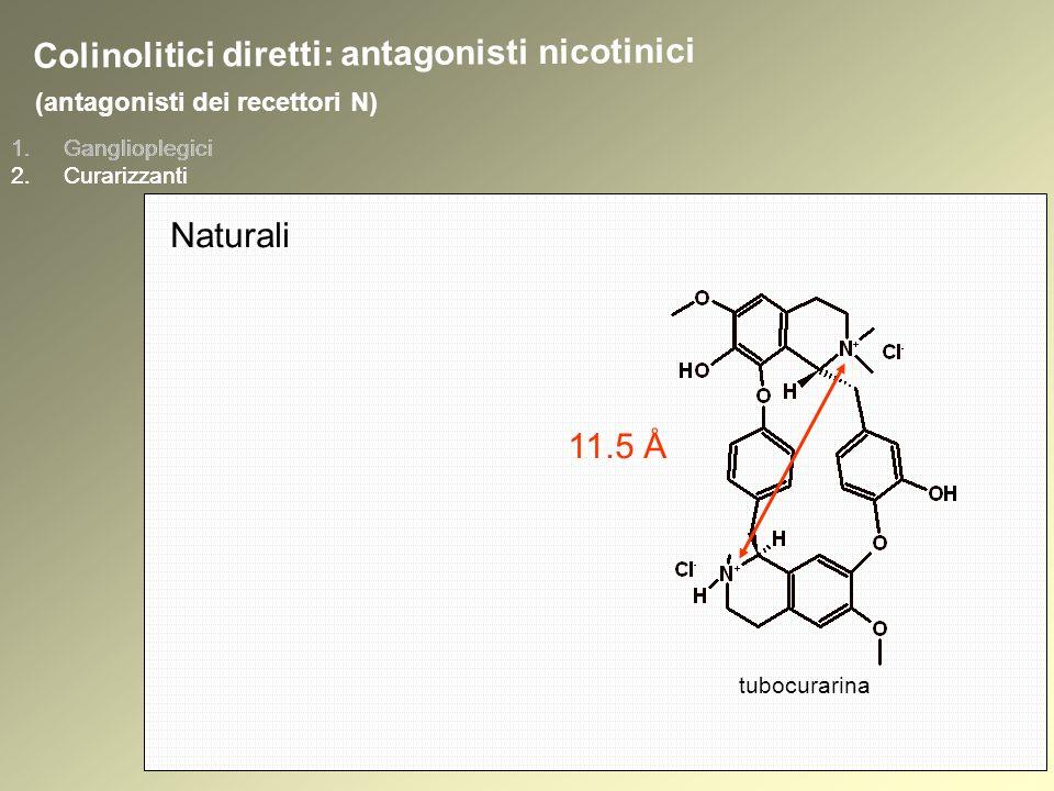 1.Ganglioplegici 2.Curarizzanti (antagonisti dei recettori N) 1.Ganglioplegici 2.Curarizzanti tubocurarina Colinolitici diretti: antagonisti nicotinici Naturali 11.5 Å
