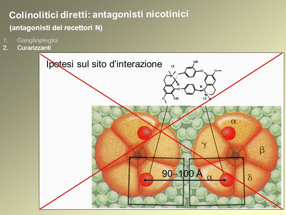 1.Ganglioplegici 2.Curarizzanti (antagonisti dei recettori N) 1.Ganglioplegici 2.Curarizzanti Colinolitici diretti: antagonisti nicotinici Ipotesi sul sito dinterazione 90 100 Å