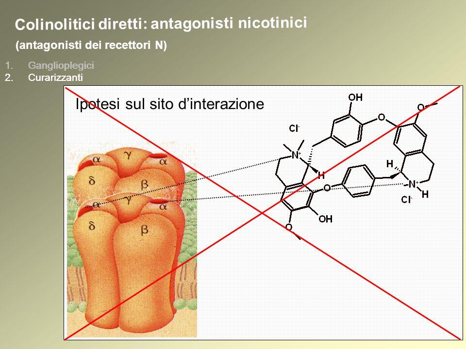 1.Ganglioplegici 2.Curarizzanti (antagonisti dei recettori N) 1.Ganglioplegici 2.Curarizzanti Colinolitici diretti: antagonisti nicotinici Ipotesi sul sito dinterazione