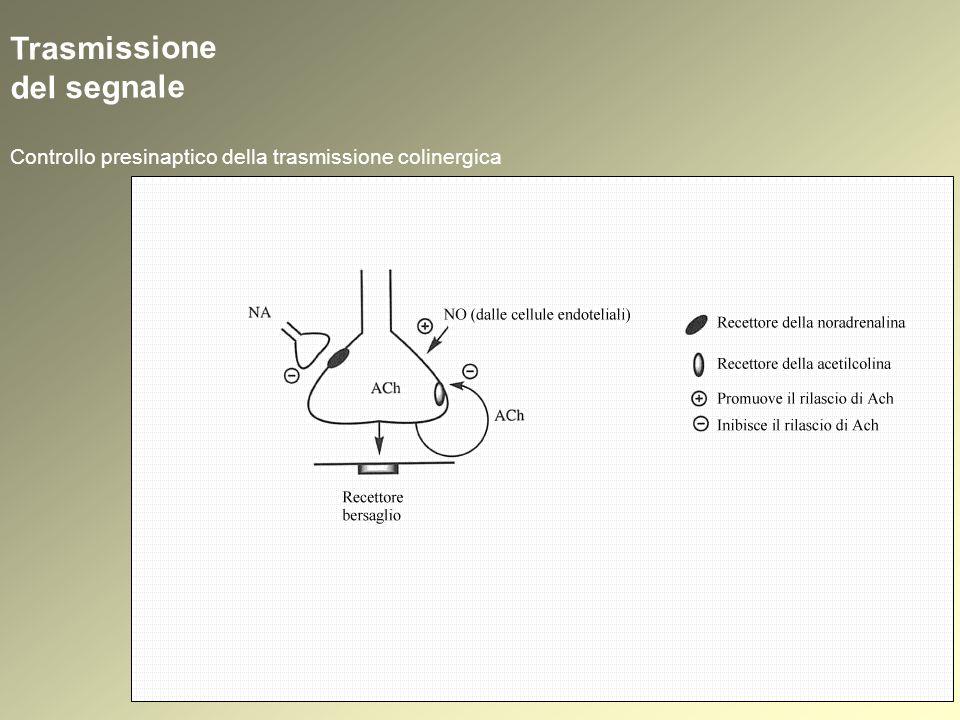 1.Reversibili 2.Irreversibili (Anticolinesterasici) Colinomimetici indiretti: inibitori dellAChasi Carbammati – meccanismo dinibizione Stadio 1: esaltazione delle proprietà nucleofile dellOH serinico (catalisi basica) 1.Reversibili 2.Irreversibili