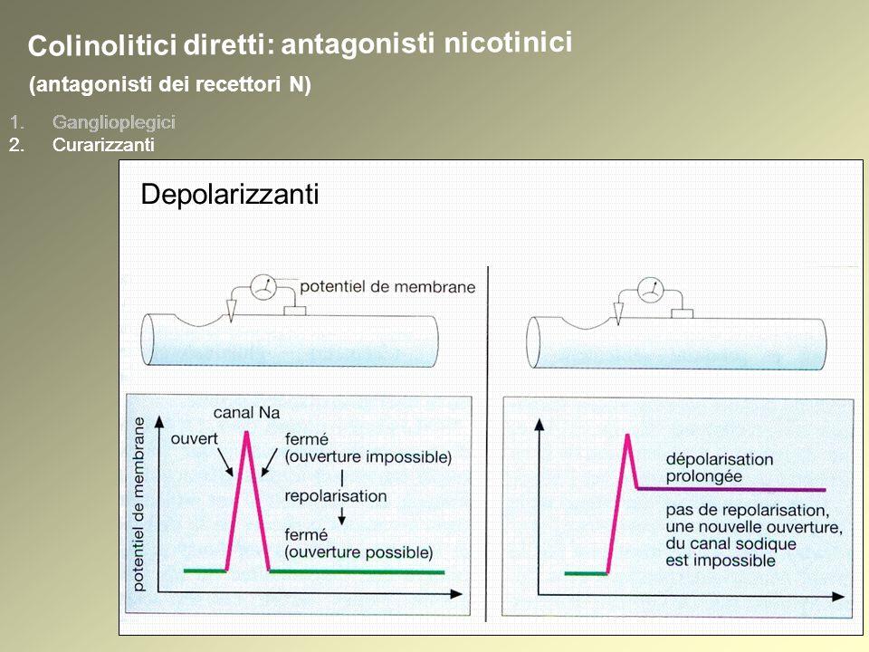 1.Ganglioplegici 2.Curarizzanti (antagonisti dei recettori N) 1.Ganglioplegici 2.Curarizzanti Colinolitici diretti: antagonisti nicotinici Depolarizzanti
