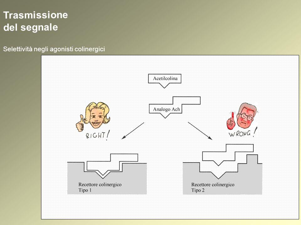 Trasmissione del segnale Selettività negli agonisti colinergici
