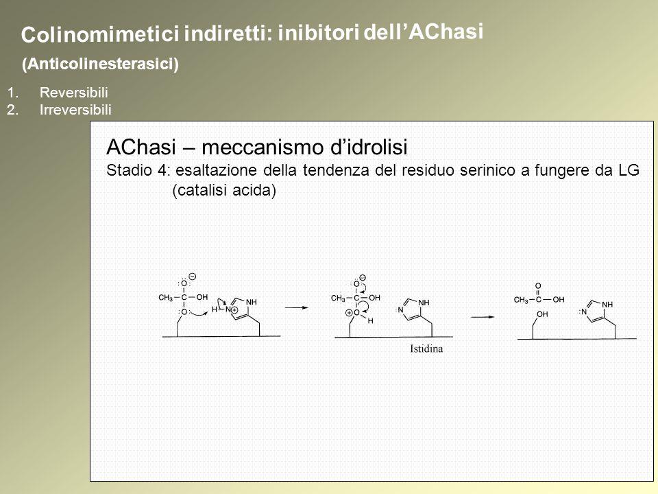 1.Reversibili 2.Irreversibili (Anticolinesterasici) Colinomimetici indiretti: inibitori dellAChasi AChasi – meccanismo didrolisi Stadio 4: esaltazione della tendenza del residuo serinico a fungere da LG (catalisi acida)