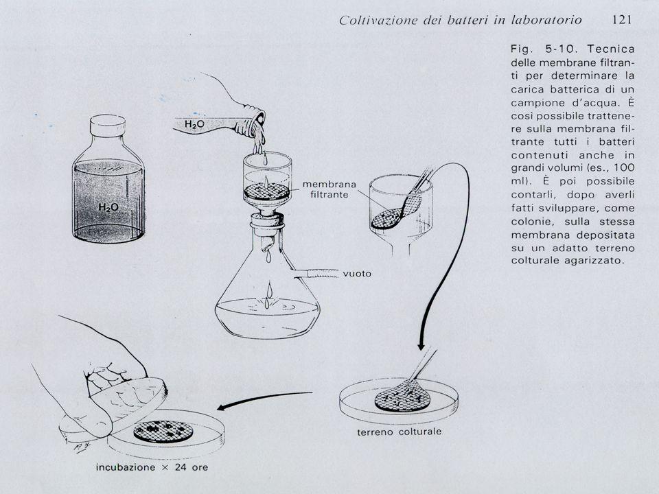 membrane filtranti