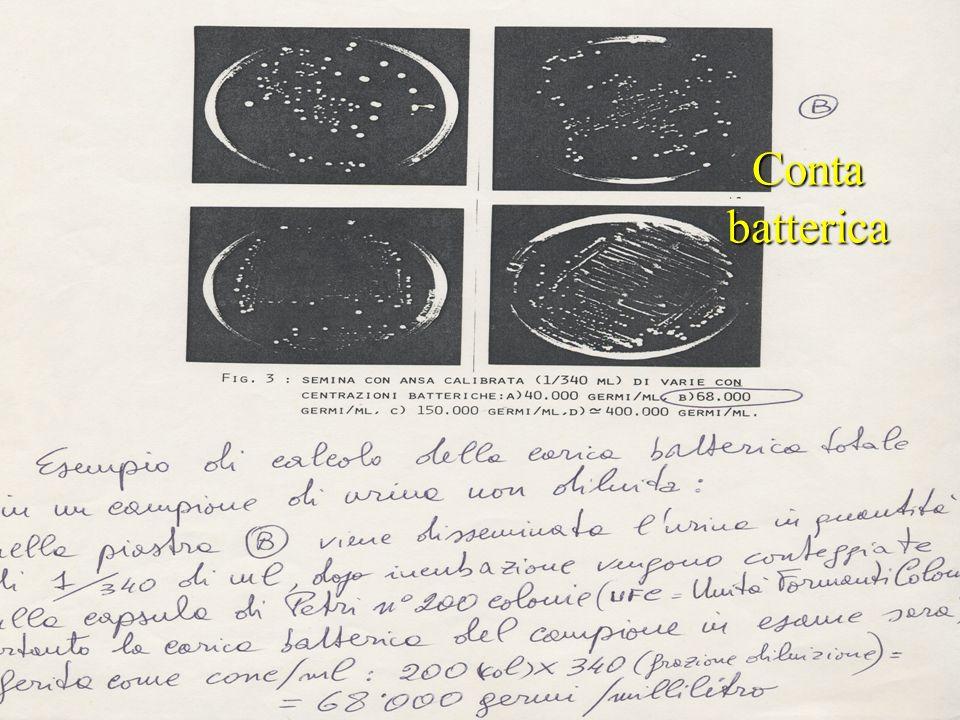 Conta batterica