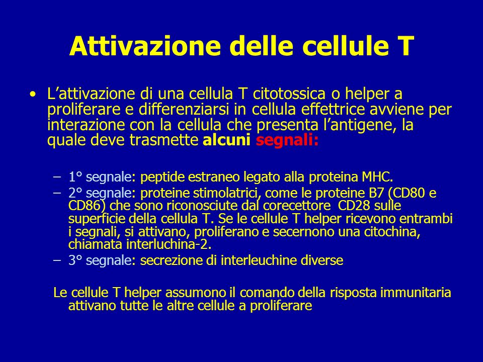 Linfociti T helper: secernono citochine che favoriscono la risposta umorale e cellulo-mediata.