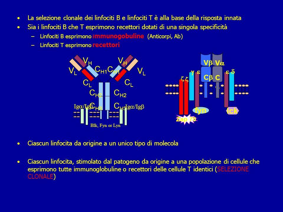 Sistema immunitario specifico Linfociti: 1.Linfociti T 2.Linfociti B Origine