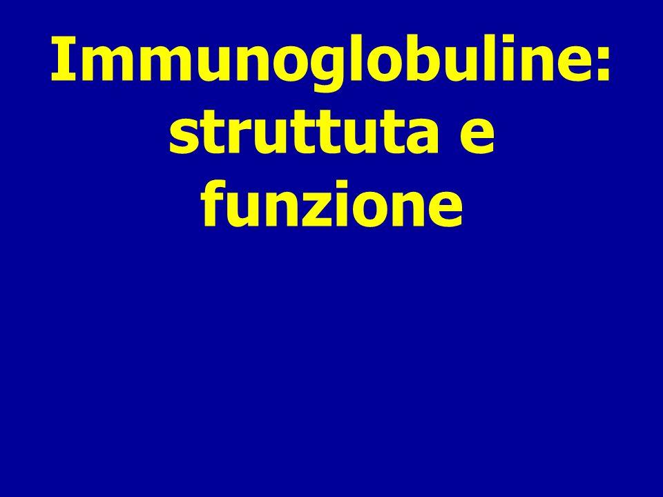 Immunoglobuline o Anticorpi Recettore delle cellule T Complesso maggiore di istocompatibilità e proteine MHC su APC Cellule che presentano lantigene (APC) Gli strumenti del sistema immunitario acquisito