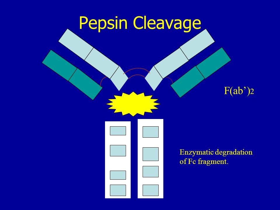 Pepsin Cleavage