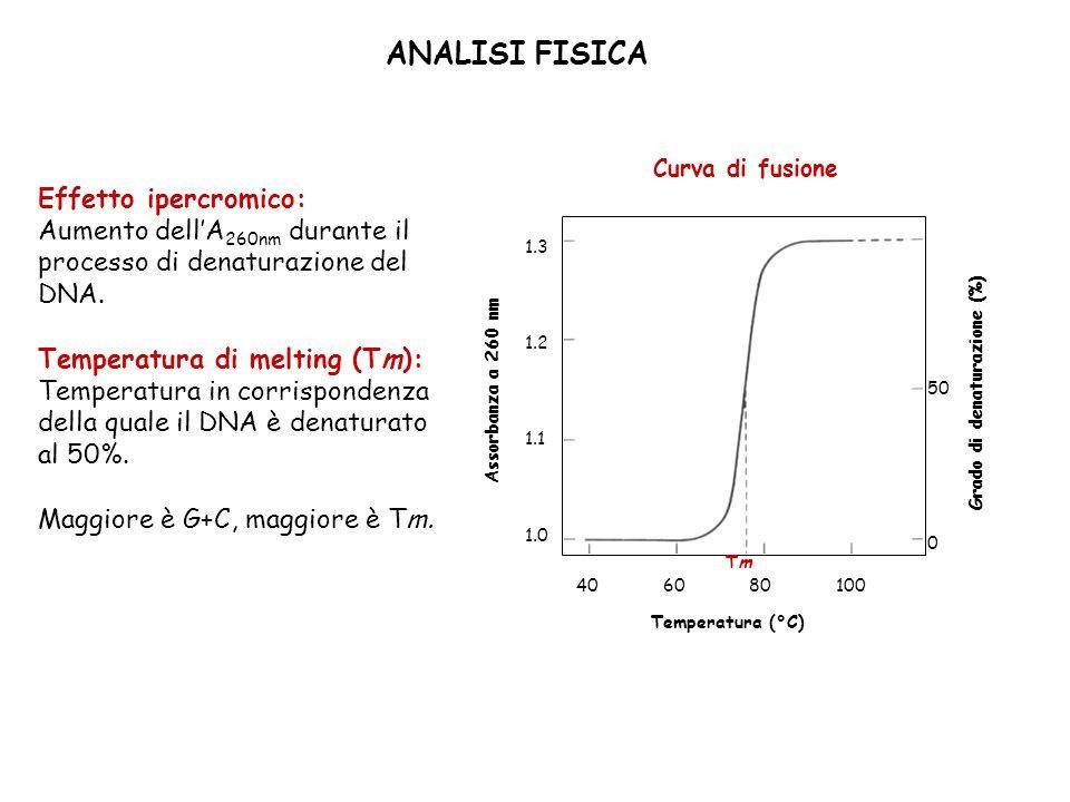 ANALISI FISICA Effetto ipercromico: Aumento dellA 260nm durante il processo di denaturazione del DNA. Temperatura di melting (Tm): Temperatura in corr