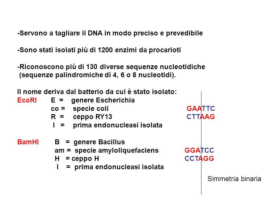 Chimica del DNA Soluzione viscosa a pH 7 Diminuzione viscosità a pH estremi o a T> 80°C Denaturazione ( aumento D.O) Rinaturazione (diminuzione D.O.) Formazione di ibridi anche tra catene di specie diverse I nucleotidi vanno incontro a trasformazioni chimiche (mutazioni)