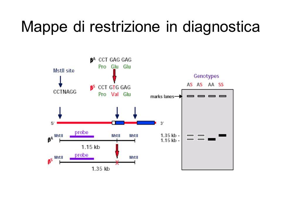 Mappe di restrizione in diagnostica