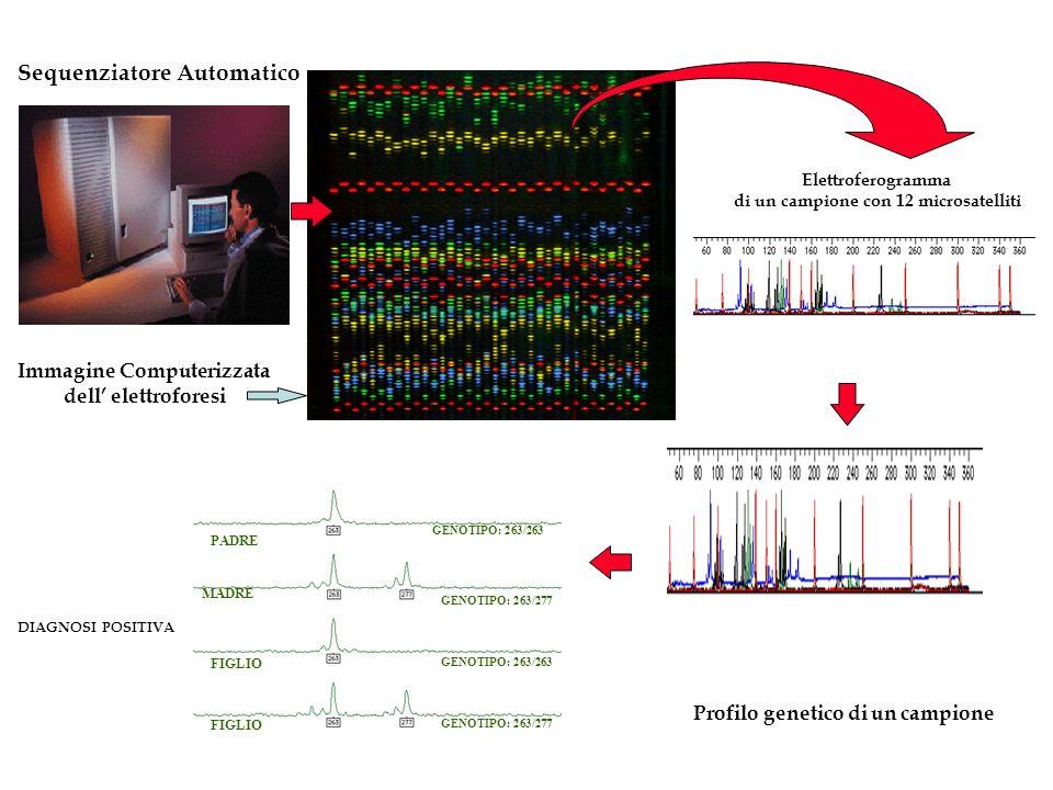 Sequenziatore Automatico Immagine Computerizzata dell elettroforesi Elettroferogramma di un campione con 12 microsatelliti PADRE MADRE FIGLIO GENOTIPO: 263/263 GENOTIPO: 263/277 GENOTIPO: 263/263 DIAGNOSI POSITIVA Profilo genetico di un campione