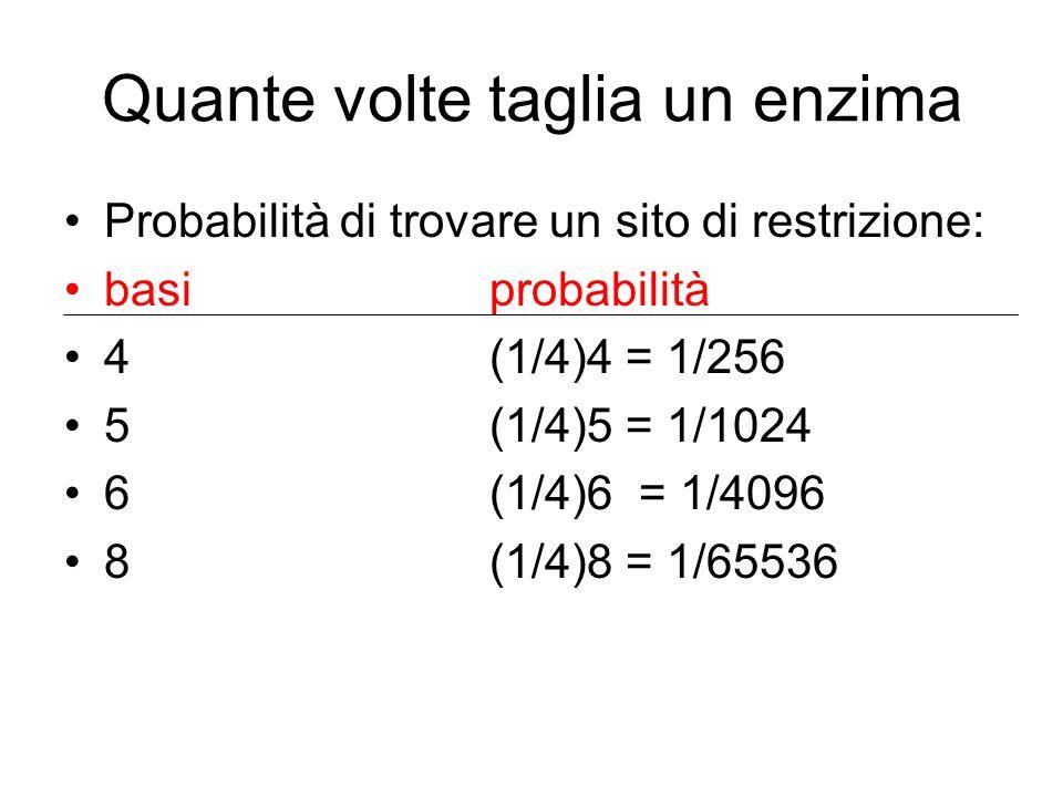 Quante volte taglia un enzima Probabilità di trovare un sito di restrizione: basiprobabilità 4(1/4)4 = 1/256 5(1/4)5 = 1/1024 6(1/4)6 = 1/4096 8(1/4)8