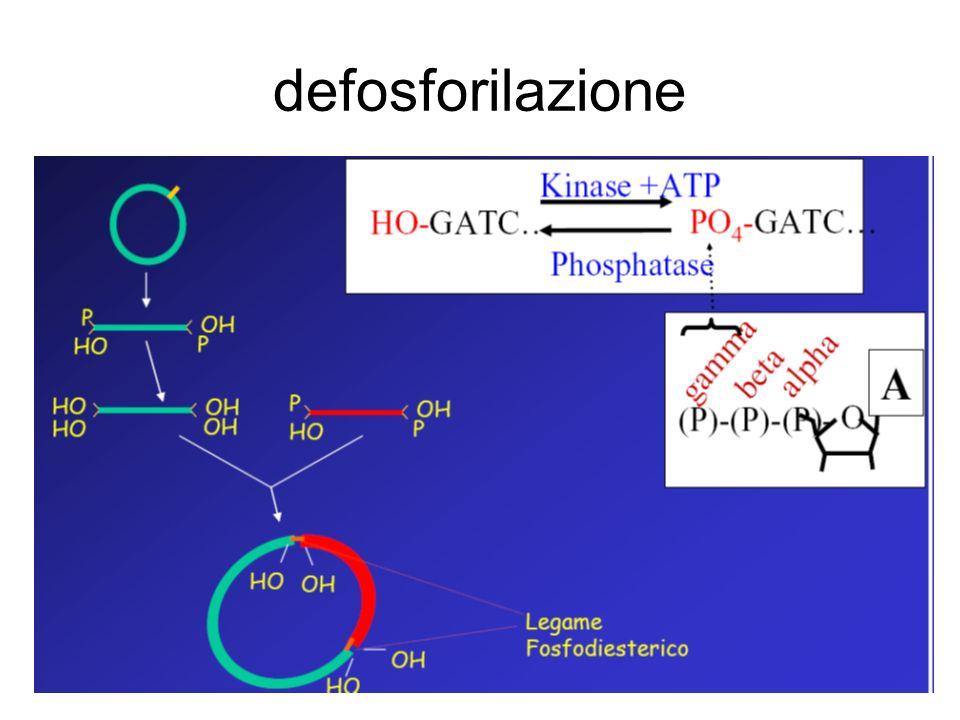 defosforilazione