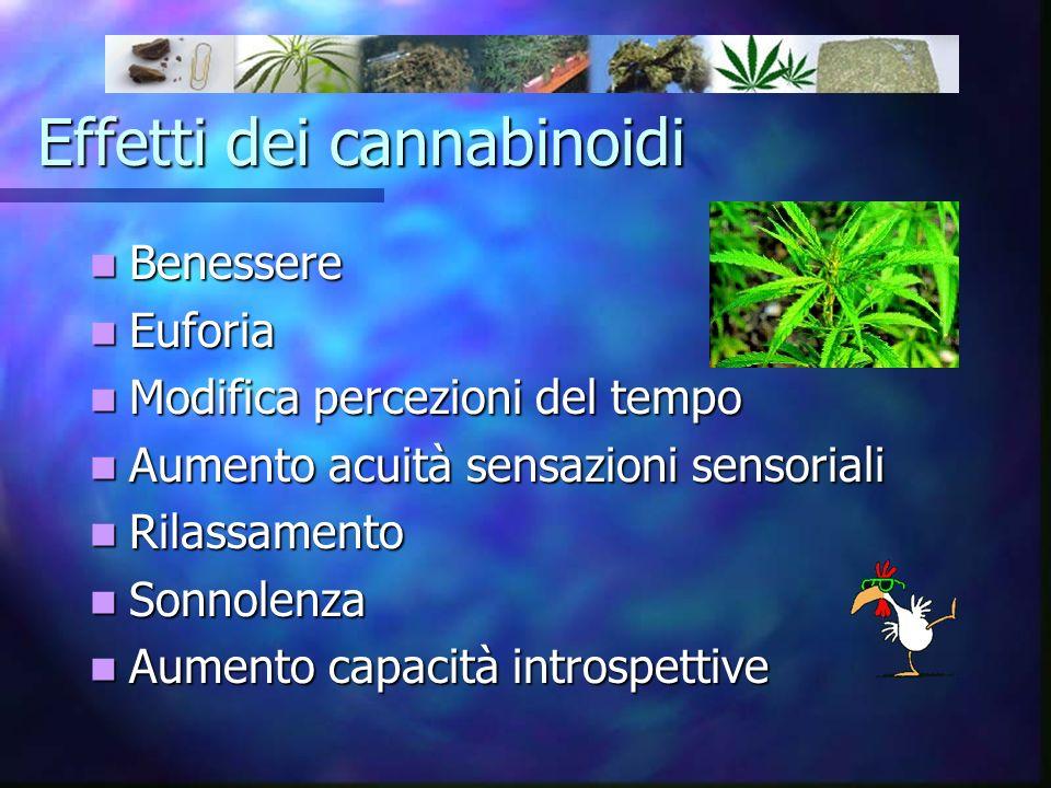 Effetti dei cannabinoidi Benessere Benessere Euforia Euforia Modifica percezioni del tempo Modifica percezioni del tempo Aumento acuità sensazioni sen