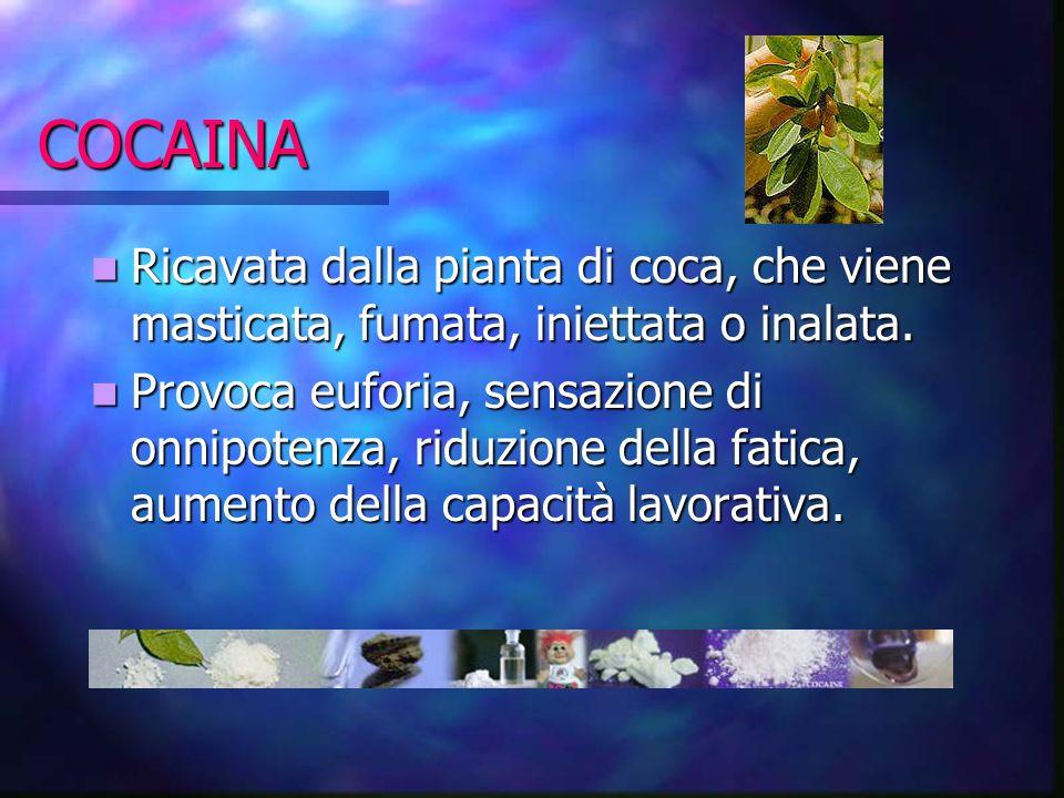 COCAINA Ricavata dalla pianta di coca, che viene masticata, fumata, iniettata o inalata. Ricavata dalla pianta di coca, che viene masticata, fumata, i