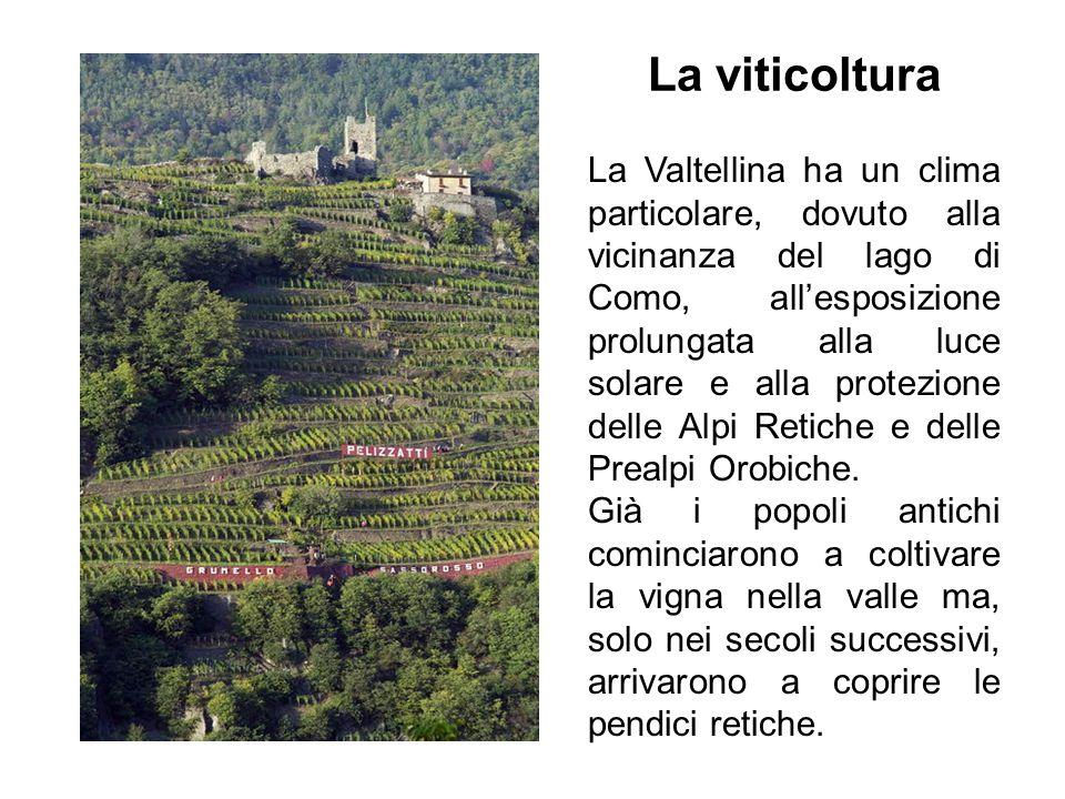 La Valtellina ha un clima particolare, dovuto alla vicinanza del lago di Como, allesposizione prolungata alla luce solare e alla protezione delle Alpi