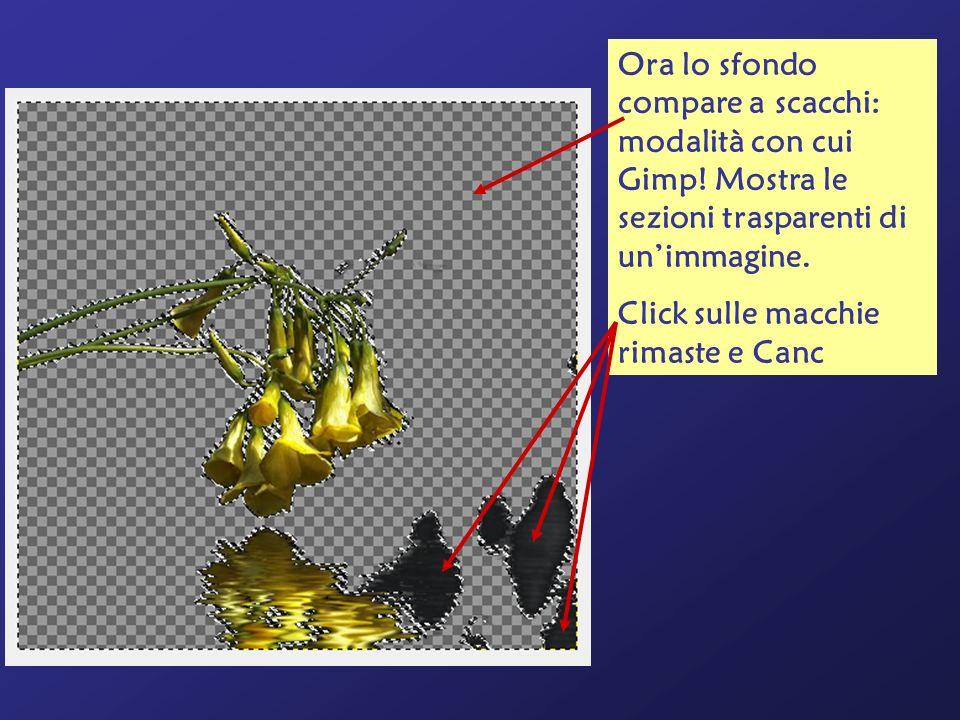 Ora lo sfondo compare a scacchi: modalità con cui Gimp! Mostra le sezioni trasparenti di unimmagine. Click sulle macchie rimaste e Canc