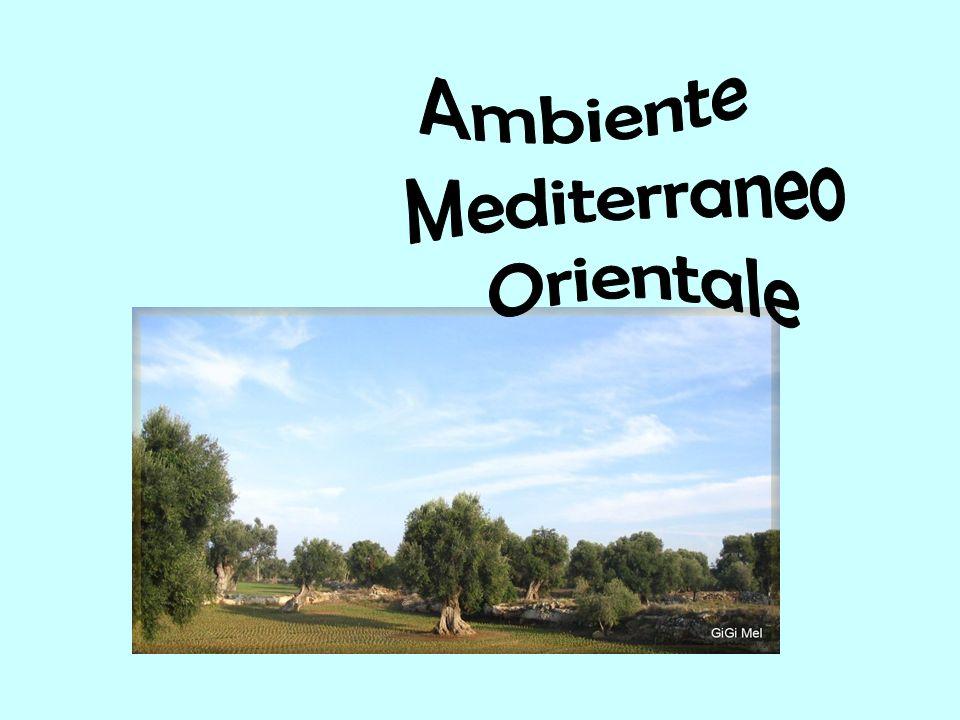 Il clima mediterraneo, anche detto temperato caldo, è tipico delle aree più vicine ai tropici.