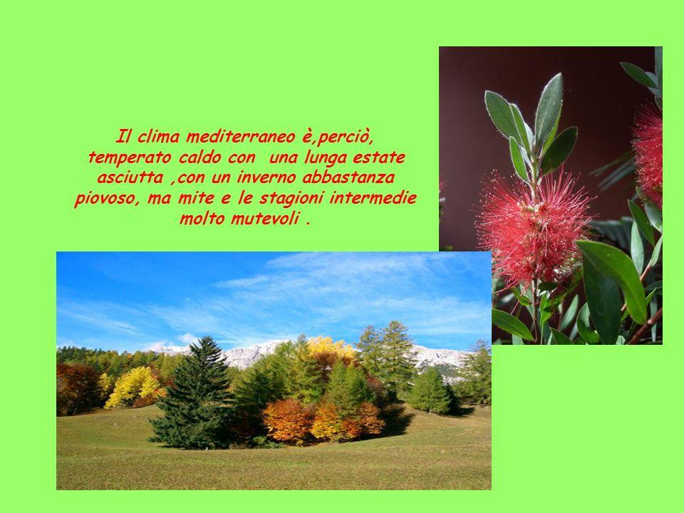 Il clima mediterraneo è,perciò, temperato caldo con una lunga estate asciutta,con un inverno abbastanza piovoso, ma mite e le stagioni intermedie molt