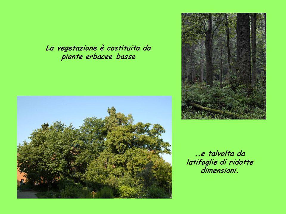 La vegetazione è costituita da piante erbacee basse..e talvolta da latifoglie di ridotte dimensioni.