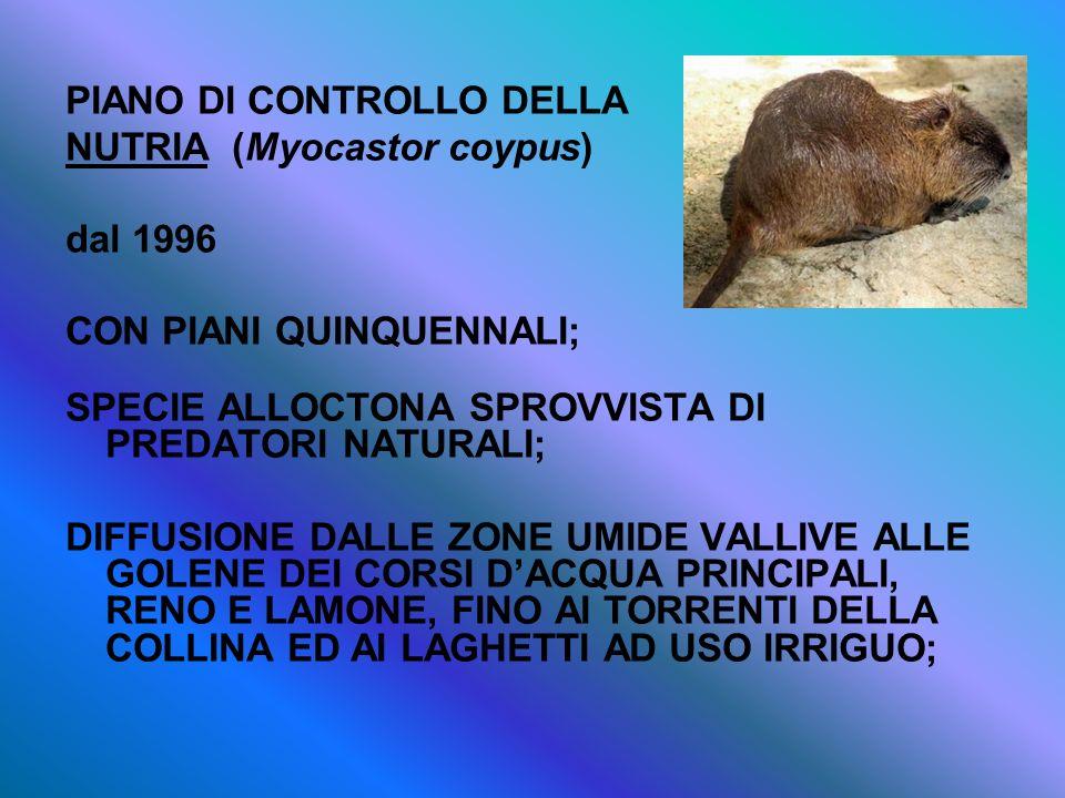 PIANO DI CONTROLLO DELLA NUTRIA (Myocastor coypus) dal 1996 CON PIANI QUINQUENNALI; SPECIE ALLOCTONA SPROVVISTA DI PREDATORI NATURALI; DIFFUSIONE DALL