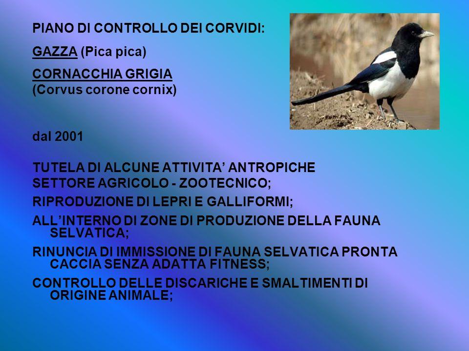 PIANO DI CONTROLLO DEI CORVIDI: GAZZA (Pica pica) CORNACCHIA GRIGIA (Corvus corone cornix) dal 2001 TUTELA DI ALCUNE ATTIVITA ANTROPICHE SETTORE AGRIC