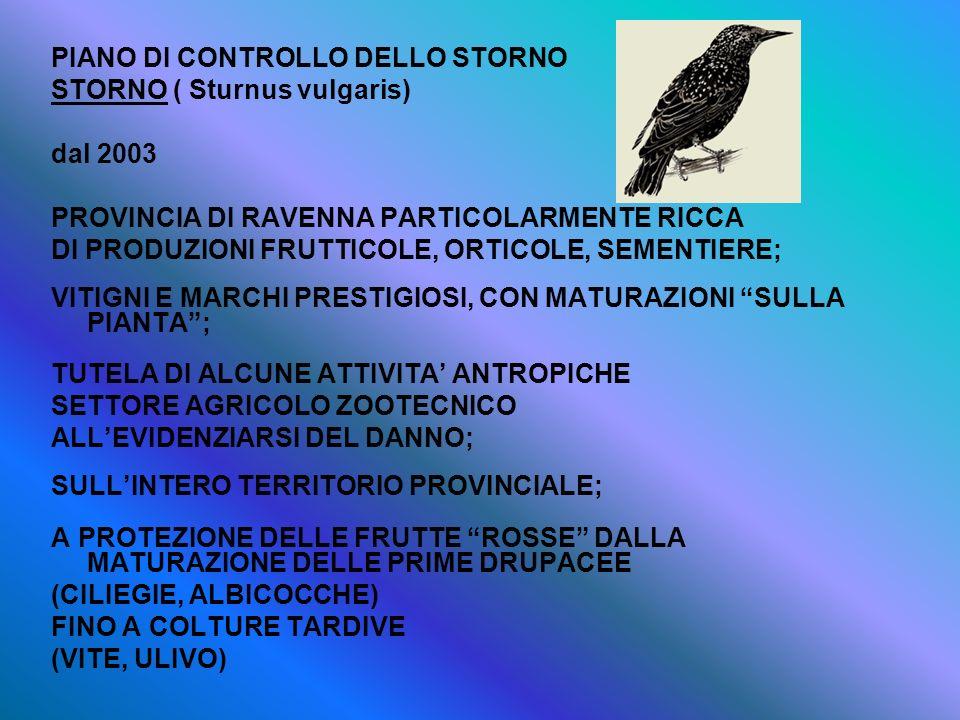 PIANO DI CONTROLLO DELLO STORNO STORNO ( Sturnus vulgaris) dal 2003 PROVINCIA DI RAVENNA PARTICOLARMENTE RICCA DI PRODUZIONI FRUTTICOLE, ORTICOLE, SEM