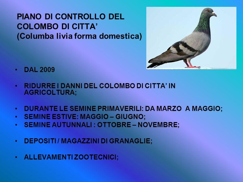 PIANO DI CONTROLLO DEL COLOMBO DI CITTA (Columba livia forma domestica) DAL 2009 RIDURRE I DANNI DEL COLOMBO DI CITTA IN AGRICOLTURA; DURANTE LE SEMIN