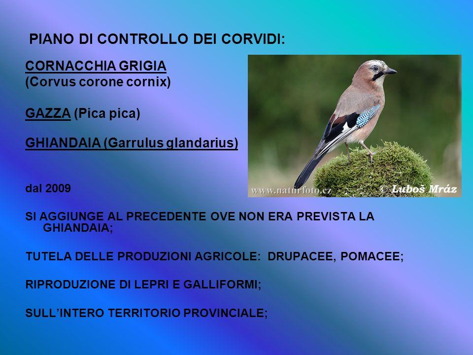 PIANO DI CONTROLLO DEI CORVIDI: CORNACCHIA GRIGIA (Corvus corone cornix) GAZZA (Pica pica) GHIANDAIA (Garrulus glandarius) dal 2009 SI AGGIUNGE AL PRE