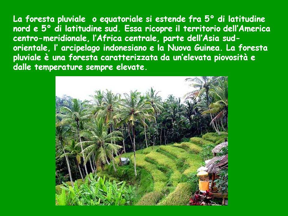 La foresta pluviale o equatoriale si estende fra 5° di latitudine nord e 5° di latitudine sud. Essa ricopre il territorio dellAmerica centro-meridiona