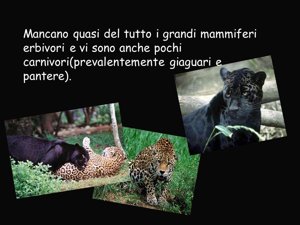 Mancano quasi del tutto i grandi mammiferi erbivori e vi sono anche pochi carnivori(prevalentemente giaguari e pantere).